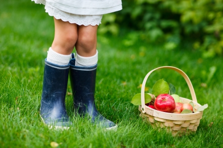 arbol de manzanas: Las manzanas orgánicas en una cesta