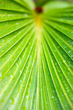 Close up of a palm tree leaves with rain drops all over it photo