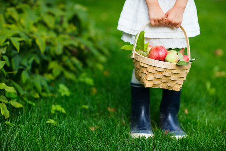 kids feet: Little girl holding a basket with red apples