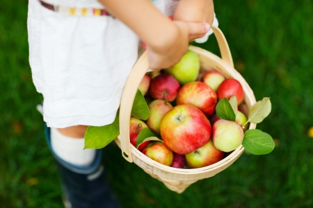Little girl holding a basket with red apples photo
