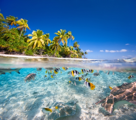 fruta tropical: Hermosa isla tropical en la Polinesia Francesa por debajo y por encima del agua