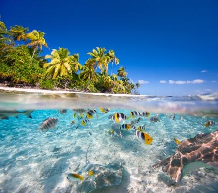 Prachtige tropische eiland in Frans Polynesië onder en boven water Stockfoto
