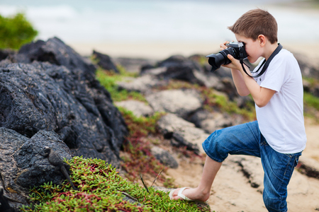 Little boy photographing marine iguanas on volcanic rocks photo