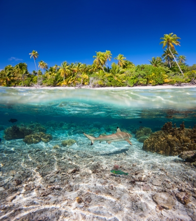 Beautiful tropical island in French Polynesia under and above water photo