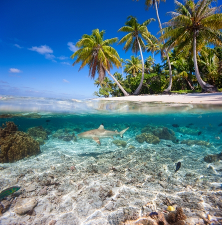 shark bay: Beautiful tropical island in French Polynesia under and above water
