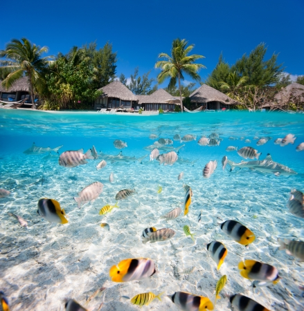 underwater ocean: Beautiful tropical island in French Polynesia under and above water