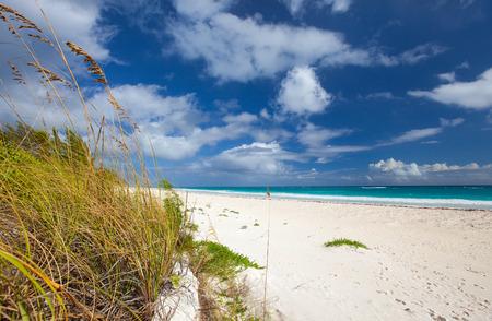 sea grass: Beautiful beach at Bahamas Harbour island