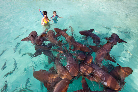 Mother and son swimming with nurse sharks photo