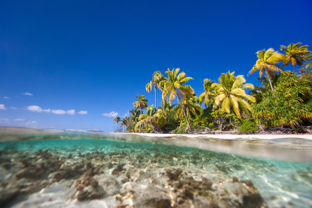 polynesia: Beautiful tropical island above and under water