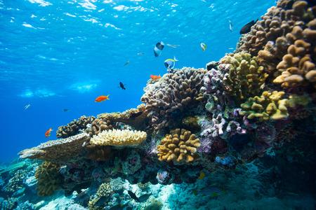 아름 다운 화려한 산호초와 몰디브에서 열 대 물고기 수중