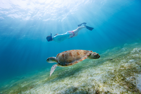 Underwater photo of young woman snorkeling and swimming with Hawksbill sea turtle photo