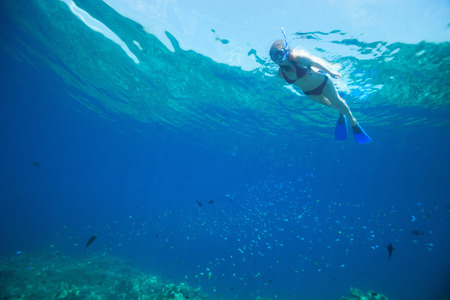 sea animal: Underwater photo of woman snorkeling in tropical water Stock Photo