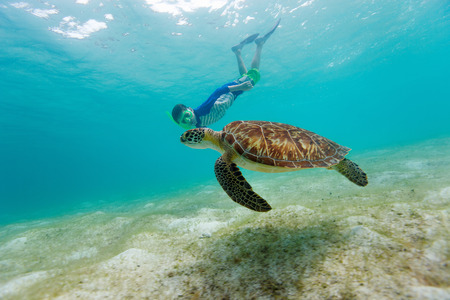 Underwater photo of boy snorkeling and swimming with Hawksbill sea turtle photo