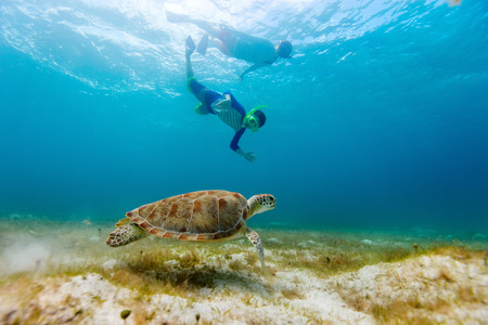 diving: Underwater photo of family mother and son snorkeling and swimming with Hawksbill sea turtle