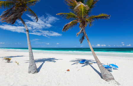 Coconut palms at perfect Caribbean beach in Tulum Mexico