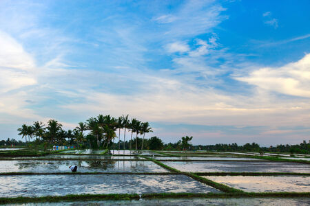 Evening photo of a beautiful rice field full of water photo