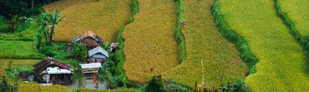Panorama of beautiful terraced rice field on Bali Indonesia photo
