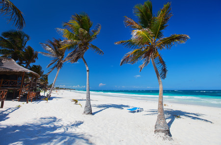 Coconut palms at perfect Caribbean beach in Tulum Mexico photo
