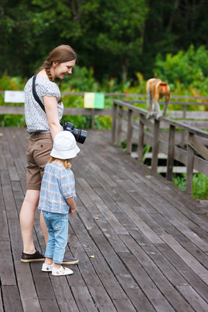 sandakan: Mother and daughter looking at  proboscis monkey on Borneo island in Malaysia