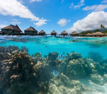 Beau jardin de corail sous bungalows sur l'eau en Polynésie française Banque d'images