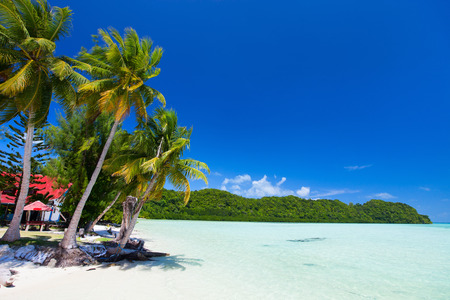 micronesia: Beautiful tropical beach with palm trees, white sand, turquoise ocean water and blue sky at Palau