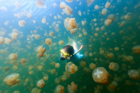 jellyfish: Underwater photo of tourist woman snorkeling with endemic golden jellyfish in lake at Palau. Snorkeling in Jellyfish Lake is a popular activity for tourists to Palau. Stock Photo