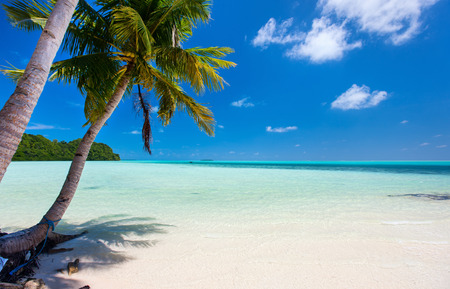 Beautiful tropical beach with palm trees, white sand, turquoise ocean water and blue sky at Palau