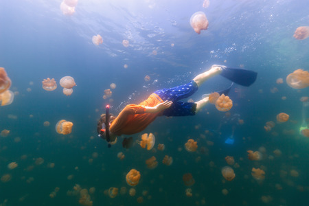 micronesia: Underwater photo of tourist child snorkeling with endemic stingless jellyfish in lake at Palau. Snorkeling in Jellyfish Lake is a popular activity for tourists to Palau.