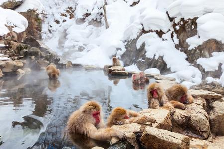 Neige Singes Macaques japonais baignade dans les sources thermales onsen de Nagano, au Japon Banque d'images - 40585522