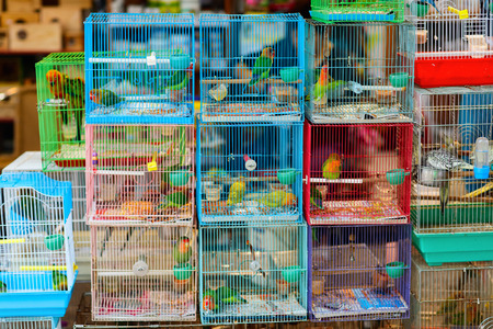 street market: Birds in cages for sale at Birds market, Kowloon Hong Kong, popular tourist destination. Stock Photo
