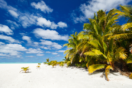 south pacific ocean: Stunning tropical beach with palm trees, white sand, turquoise ocean water and blue sky at Cook Islands, South Pacific