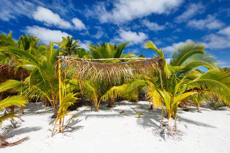 south pacific: Stunning tropical beach with palm trees, white sand and blue sky at Cook Islands, South Pacific