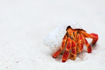 cangrejo: Cangrejo de ermita�o en la playa blanca arena con copia espacio grande para el anuncio Foto de archivo
