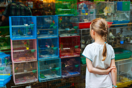 street market: Little girl looking at birds in cages for sale at Birds market, Kowloon Hong Kong, popular tourist destination.