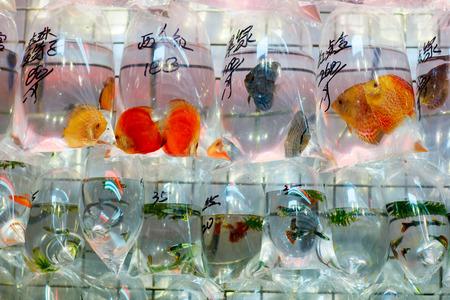 city fish market: Bags of goldfish for sale at a market Mong Kok Kowloon in Hong Kong