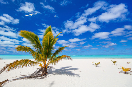 south pacific ocean: Stunning Honeymoon island tropical beach with palm trees, white sand, turquoise ocean water and blue sky at Cook Islands, South Pacific Stock Photo