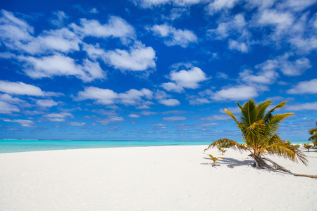 south pacific: Stunning Honeymoon island tropical beach with palm trees, white sand, turquoise ocean water and blue sky at Cook Islands, South Pacific Stock Photo