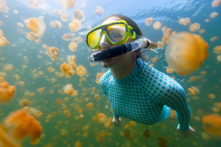 Underwater photo of tourist woman snorkeling with endemic golden jellyfish in lake at Palau. Snorkeling in Jellyfish Lake is a popular activity for tourists to Palau. Archivio Fotografico