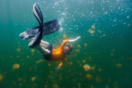 jellyfish: Underwater photo of tourist child snorkeling with endemic stingless jellyfish in lake at Palau. Snorkeling in Jellyfish Lake is a popular activity for tourists to Palau.