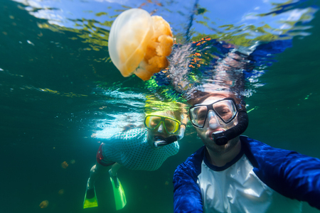 palau: Underwater photo of couple snorkeling with endemic golden jellyfish in lake at Palau. Snorkeling in Jellyfish Lake is a popular activity for tourists to Palau. Stock Photo