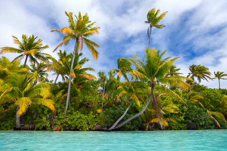 stunning: Stunning tropical island with palm trees, white sand and turquoise ocean water at Cook Islands, South Pacific Stock Photo