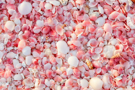 Pink sand beach on Barbuda island in Caribbean made of tiny pink shells, close up photo Reklamní fotografie