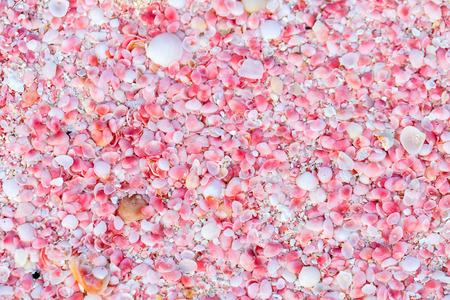 Rosa Sandstrand auf der Insel Barbuda in Karibik aus kleinen rosa Muscheln, Nahaufnahme Foto Standard-Bild