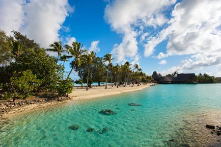 bora: Beautiful beach with coconut palms on Bora Bora island in French Polynesia Stock Photo