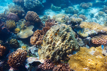polynesia: Beautiful colorful coral reef in Pacific ocean Stock Photo