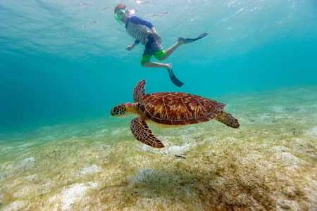 Underwater photo of boy snorkeling and swimming with Hawksbill sea turtle