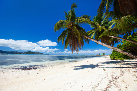 paradise bay: Perfect beach on Seychelles with white sand, turquoise waters, palm trees and blue sky