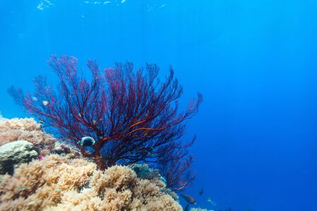reef fish: Beautiful colorful coral reef and tropical fish underwater at Palau