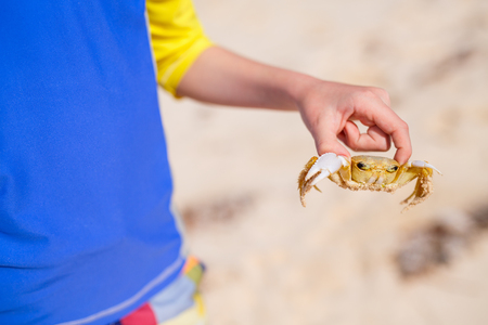 holding close: Close up of boy holding crab at beach Stock Photo