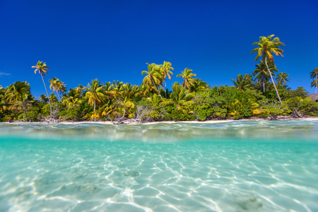 polynesia: Beautiful tropical island above and underwater